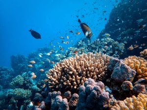 Top Stunning Dive Sites in Egypt For All Scuba Divers